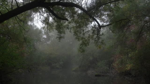 vidéos et rushes de dolly shot ws isle rhinau - floating nder trees in morning mist - fantasmagorie