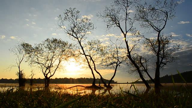vídeos de stock, filmes e b-roll de câmera em movimento: lago paisagem ao nascer do sol - floresta tropical