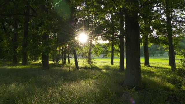 dolly shot. light beams (sunbeams) in forest. bavaria, germany. - liten skog bildbanksvideor och videomaterial från bakom kulisserna
