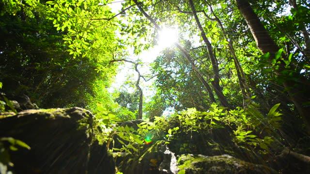 Kamerafahrt mit Dolly: Natur in Regenwald