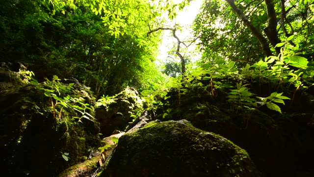 Dolly Shot: Nature in Rain Forests