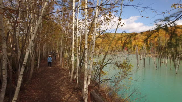 dolly shot of a trail at the shirogane blue pond - biei town stock videos & royalty-free footage