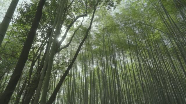 dolly shot of arashiyama bamboo forest - bamboo plant点の映像素材/bロール