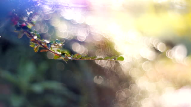 dolly shot of defocused flowerbed backlit by the sun - bunch stock videos and b-roll footage