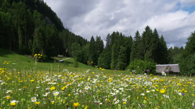Dolly Shot of meadow in the Bavarian Alps near Gerold. Gerold, Mittenwald, Garmisch-Partenkirchen, Bavaria, Bavarian Alps, Germany.