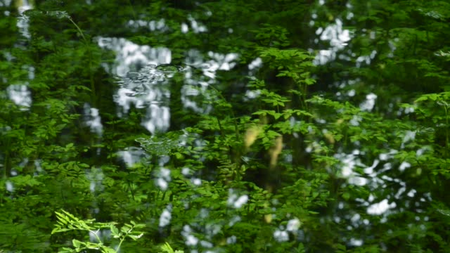 dolly shot of plants reflecting in lake at forest - ドリー撮影点の映像素材/bロール