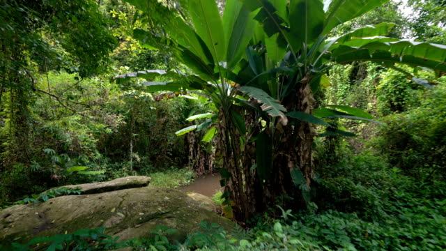 4k ws dolly shot of rainforest with lens flares. - june stock videos & royalty-free footage