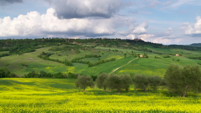 dolly shot of rolling landscape with rapeseed field and olive trees. pienza, tuscany, italdy, europe. - tuscany stock videos & royalty-free footage