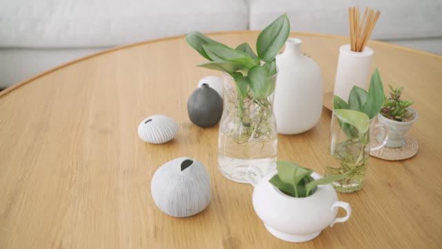 木製のテーブルの上に小さな植物の装飾のドリーショット - 観葉植物点の映像素材/bロール