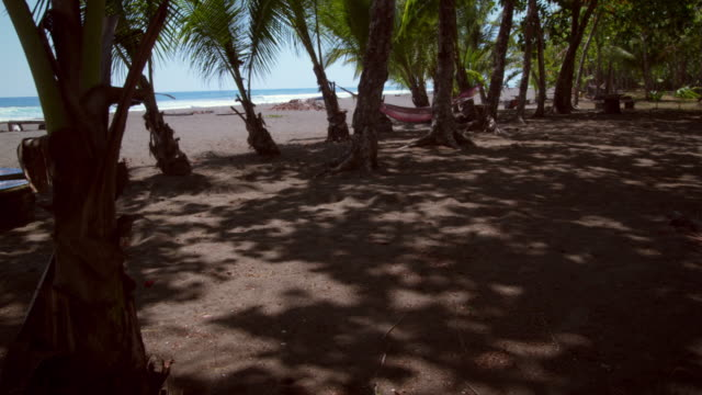 dolly shot of the beach taken from behind the palm trees - costa rica video stock e b–roll