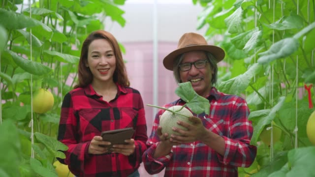 Dolly shot of two male and female farmers standing in an organic farm