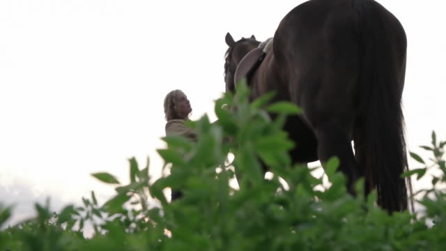 dolly shot of woman caressing horse on field - herbivorous stock videos & royalty-free footage