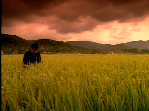 dolly shot past man working in green field / Vietnam