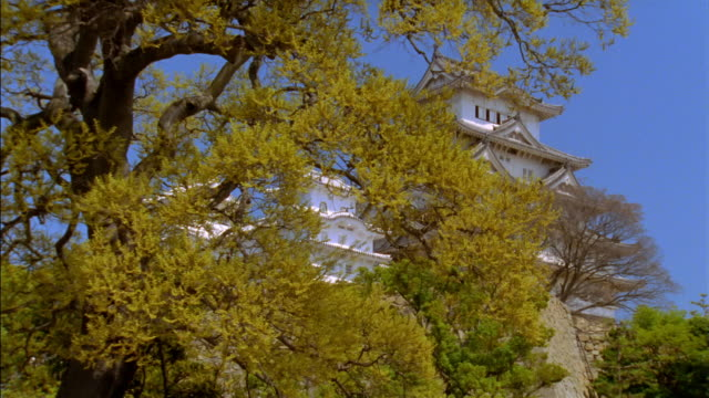 dolly shot past tree branches to reveal low angle long shot of himeji castle/ himeji, japan - 城点の映像素材/bロール