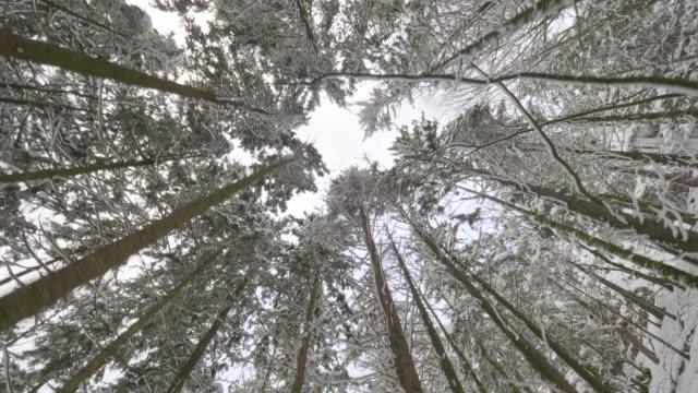 dolly skott: väg genom skogen på djupa vintern - längd bildbanksvideor och videomaterial från bakom kulisserna