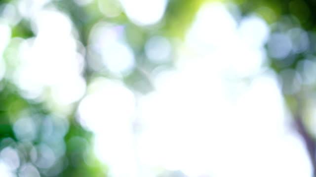 4 K ドリー ショット、太陽フレアと熱帯雨林の緑のボケ味。