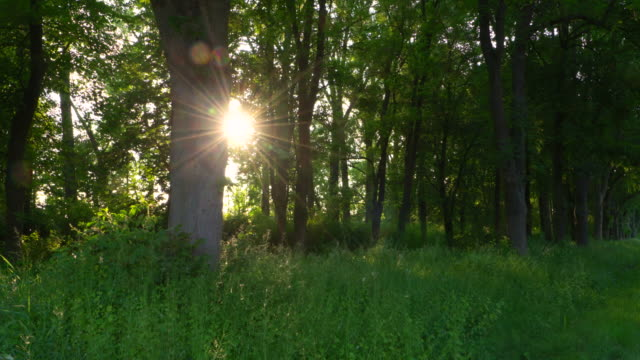 Dolly Shot. Sunbeam in forest. Bavaria, Germany.