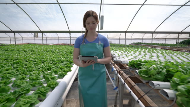 dolly shot young woman walking through a hydroponic farm - speisen und getränke stock-videos und b-roll-filmmaterial