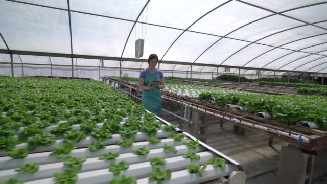 WS Dolly shot Young woman working in a hydroponic farm