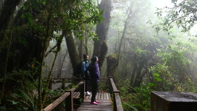 ドリー ショット  : 2 若い女性トレッキングとハイキングマップをお求めのお客様には、熱帯雨林 - 探検家点の映像素材/bロール