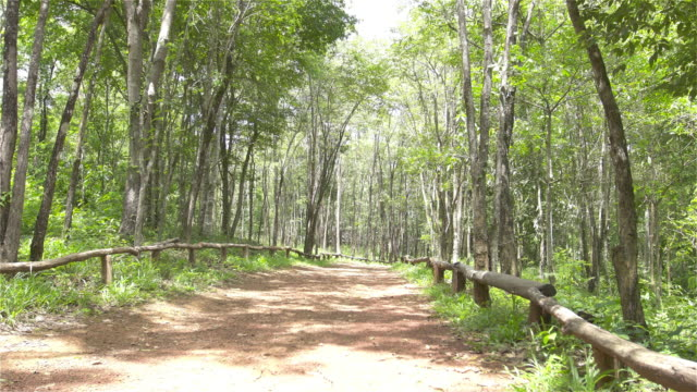 Dolly: Bürgersteig und Wald