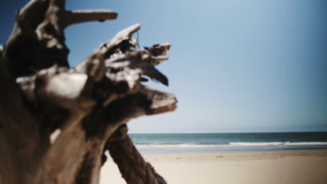 stockvideo's en b-roll-footage met dolly track behind weathered wood revealing the sea - drijfhout