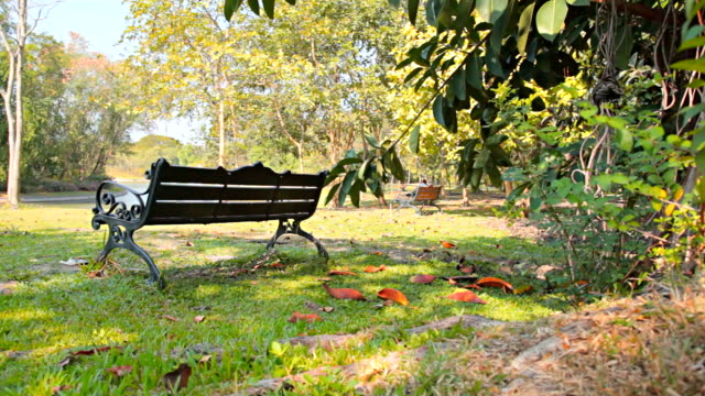 dolly:bench on a lawn area of the park. - bench stock videos & royalty-free footage