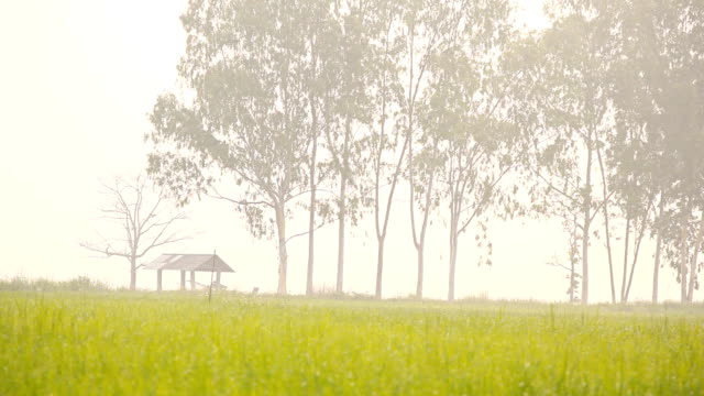 HD Dolly:Cottages and rice field in the morning.