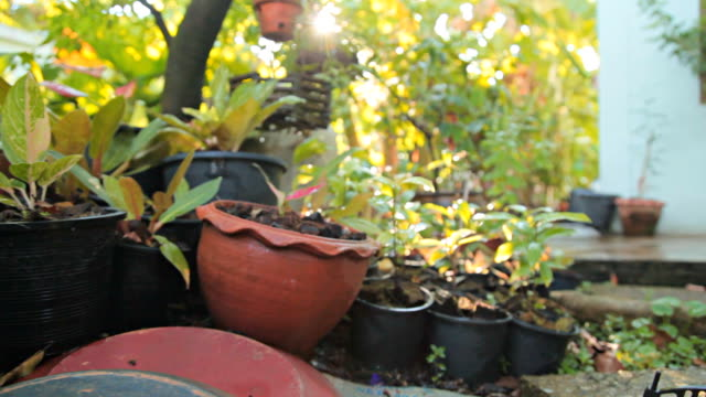 HD Dolly:Garden in home.