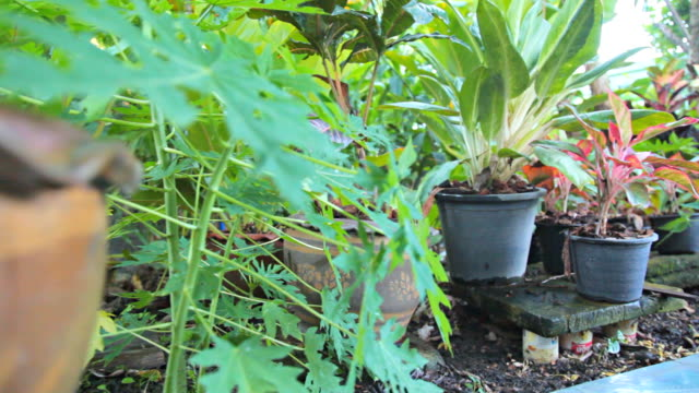 vidéos et rushes de hd dolly :  vue sur le jardin de la maison - jardin classique