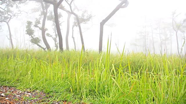 vídeos de stock, filmes e b-roll de hd dolly: grama e árvores de montanhas cobertas com nevoeiro de manhã. - artigos de vidro de laboratório
