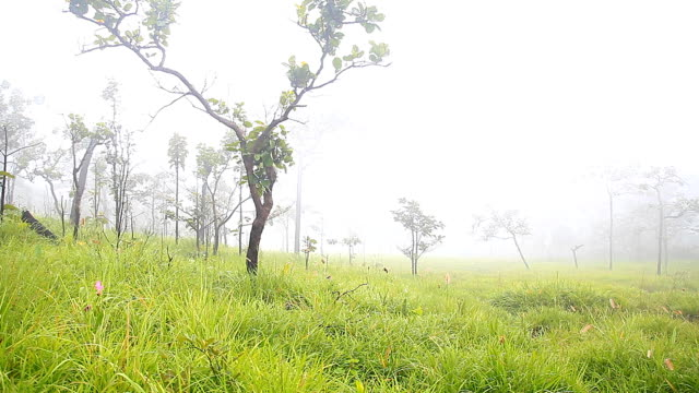 vídeos de stock, filmes e b-roll de hd dolly: meadows e árvores no cobertos de névoa da manhã. - artigos de vidro de laboratório