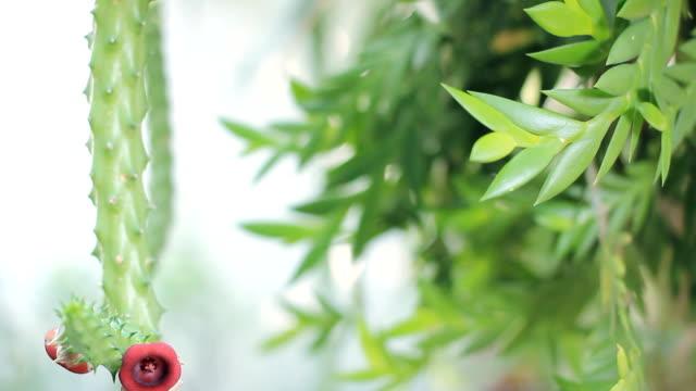 HD Dolly: Zierpflanze Kaktus im Garten