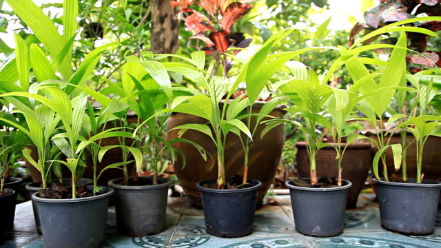 HD Dolly:Pots and plants in the home garden.