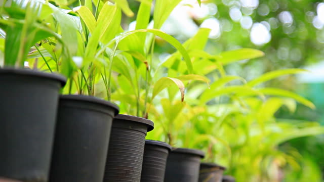 HD Dolly: Töpfen und Pflanzen in den Garten.