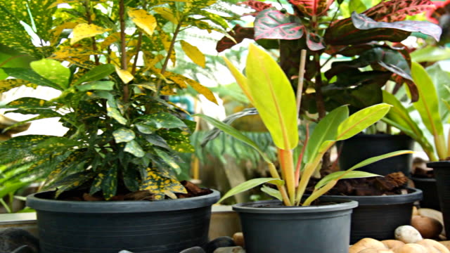 hd dolly:potted plants in the garden. - pot plant stock videos and b-roll footage