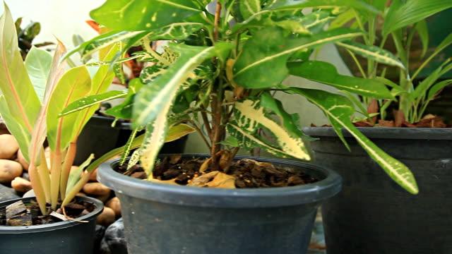 vídeos de stock, filmes e b-roll de hd dolly: vasos de plantas no jardim. - artigos de vidro de laboratório