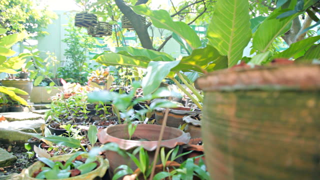 stockvideo's en b-roll-footage met dolly:potted plants in the garden - steekwagen