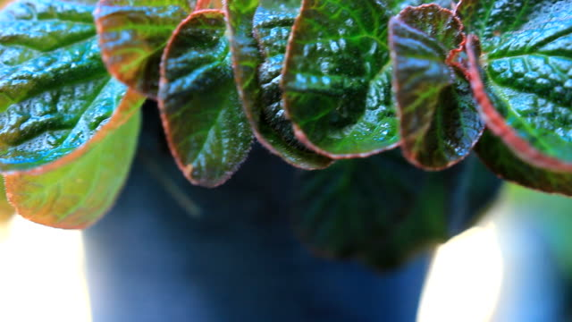 dolly:potted plants in the home garden - flower pot stock videos and b-roll footage