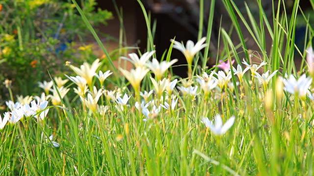 vídeos de stock, filmes e b-roll de hd dolly: pequenas flores de grama - artigos de vidro de laboratório