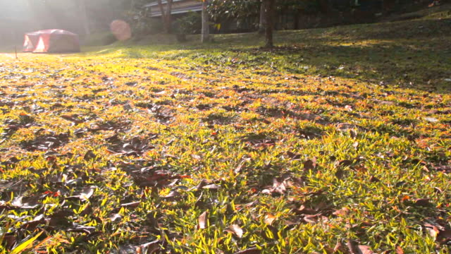 stockvideo's en b-roll-footage met dolly:sun shining down on grass with dead leaves. - steekwagen
