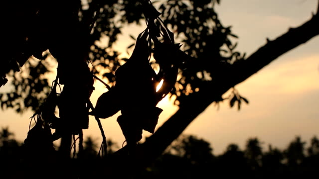 hd dolly:sunset lens flare through twigs at dark. - bugtiger stock videos and b-roll footage