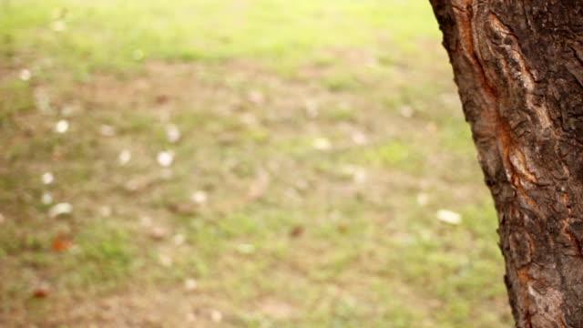 vídeos y material grabado en eventos de stock de dolly hd: tree rama y hojas, viento - mancha solar