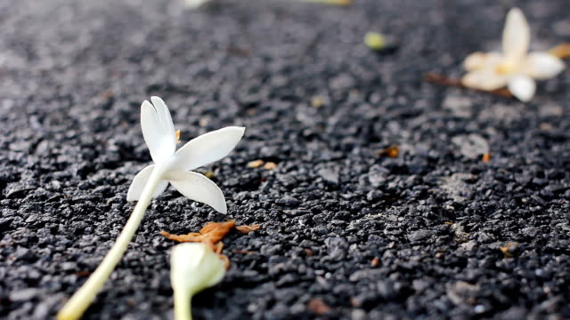 hd dolly:white flowers on the ground - bugtiger stock videos and b-roll footage