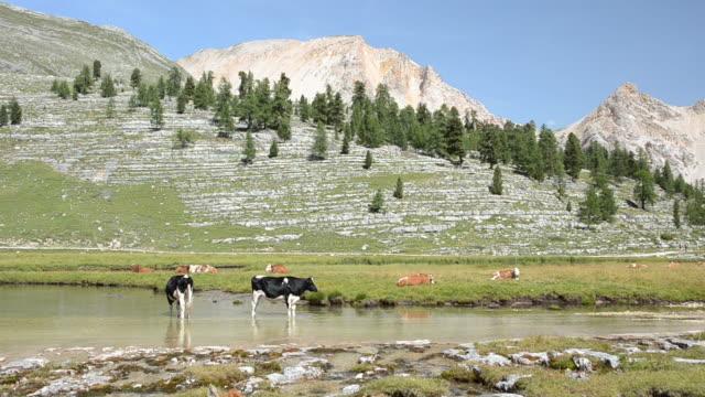 Dolomiti Scena rurale