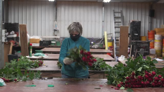 dolors albert wearing a face mask prepares roses to be sold online at the rose plant nursery flors pons on april 22, 2020 in santa susanna, near... - pons stock videos & royalty-free footage