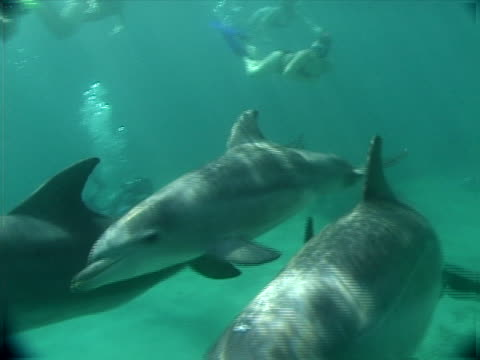 dolphin and divers - artbeats stock videos & royalty-free footage