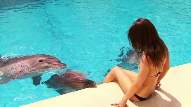 dolphin and girl - cetacea stock videos & royalty-free footage