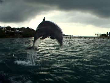 stockvideo's en b-roll-footage met dolphin and pier - dolfijn