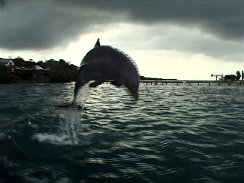 dolphin and pier - dolphin stock videos & royalty-free footage